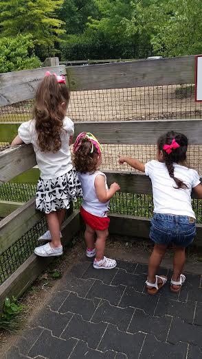 barn yard zoo