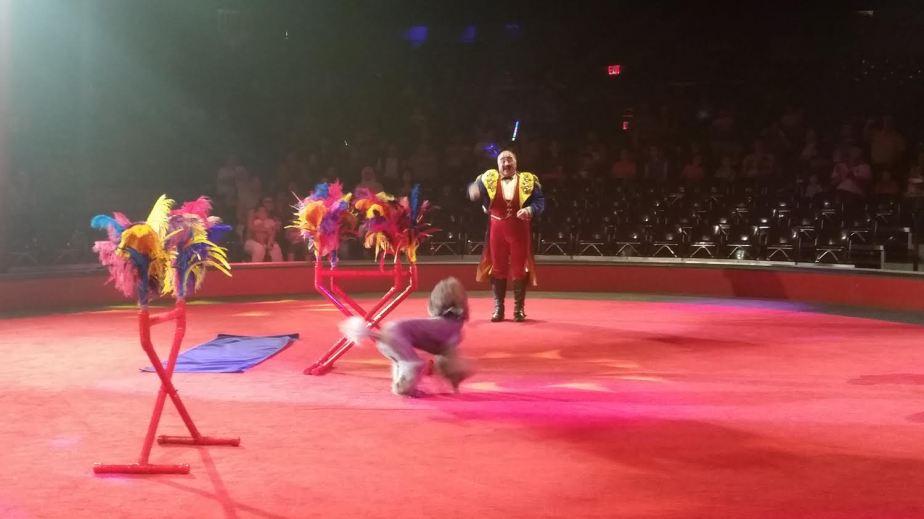 circus 14