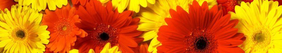 cropped-flowers2.jpg